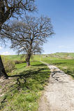 Dirt road between meadows in Italy Royalty Free Stock Image
