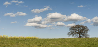 Solitary tree on the pastures Royalty Free Stock Images