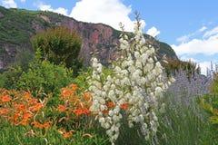 Italian landscape with mediterranean plants Stock Image