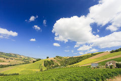 Italian landscape with vineyard in summer royalty free stock photography