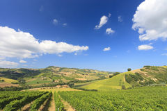 Italian landscape with vineyard in summer Royalty Free Stock Photo