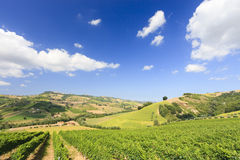 Italian landscape with vineyard in summer Royalty Free Stock Images