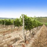 Italian landscape with vineyards Royalty Free Stock Photography