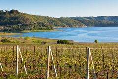 Italian landscape with vineyards and lake Royalty Free Stock Image