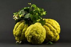 Italian lemmons Stock Image