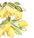 Italian lemon watercolor illustration Stock Photography