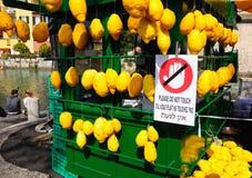 Italian lemons. Royalty Free Stock Image