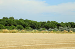Italian maquis shrubland with sand Royalty Free Stock Images