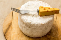Italian matured cheese called caciotta Royalty Free Stock Image