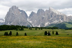 Italian mountains - Alpe di Siusi Royalty Free Stock Photos