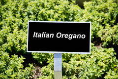 Italian Oregano Royalty Free Stock Images