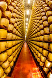 Italian Parmagiano Reggiano cheese aging. Parmigiano-Reggiano or Parmesan cheese, is a hard, granular cheese made in Italy Stock Image
