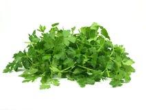 Italian parsley Royalty Free Stock Photo
