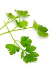 Italian Parsley Royalty Free Stock Photography