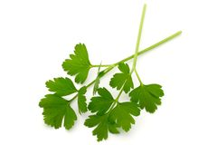 Italian Parsley Stock Images