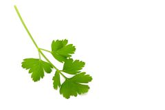 Italian Parsley Royalty Free Stock Image