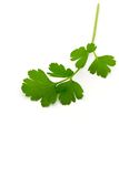 Italian Parsley Royalty Free Stock Photos