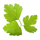 Italian Parsley leaf isolated Royalty Free Stock Photos