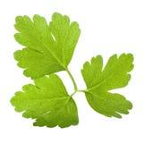 Italian Parsley leaf isolated Royalty Free Stock Photos