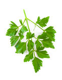Italian Parsley over white background Stock Photo