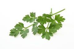Italian parsley Stock Image