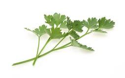 Italian parsley Stock Photos