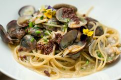 Italian pasta ditalini with black mussels royalty free stock photo