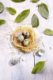 Italian pasta with quail eggs for Easter Stock Photography