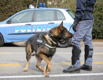 Italian police dog while patrolling the city Royalty Free Stock Photo