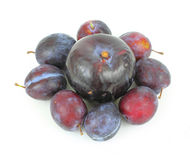 Italian Prunes and Large Black Plum Stock Photography