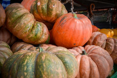 Italian ripe pumpkins Royalty Free Stock Images
