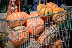 Italian ripe pumpkins Royalty Free Stock Photography