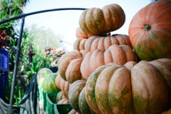 Italian ripe pumpkins Stock Photos
