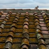 Italian roof stock photo