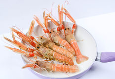 Italian scampi. Scampi italian and mediterranean shellfishes Stock Photo