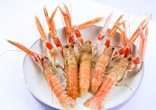 Italian scampi. Scampi italian and mediterranean shellfishes Royalty Free Stock Photo