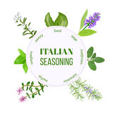 Italian seasoning. Vector Stock Photo