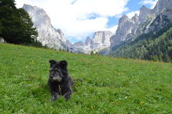Italian shepherd dog with mountains Stock Photo