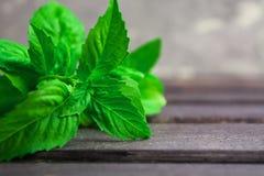 Italian spice green fresh basil on wooden table Stock Photos