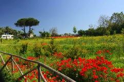 Italian spring meadow. Pompei. Campania Stock Photos