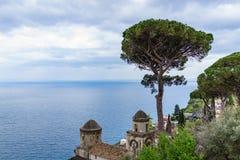 Italian Stone Pine Tree in front of Villa Rufolo with beautiful royalty free stock photo