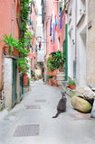 Italian street with a cat Royalty Free Stock Photography
