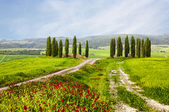 Italian summer landscape with cypresses Royalty Free Stock Photography