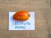 Italian tomato - Specked Roman. Royalty Free Stock Photos