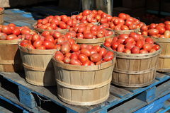 Italian tomatoes Royalty Free Stock Images