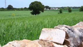 Italian traditional countryside in Puglia region. stock video