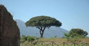 Italian tree. Toll tree with mountain on background Royalty Free Stock Photo