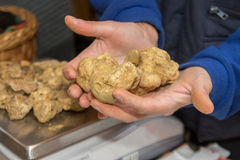 Italian Truffle Royalty Free Stock Photography