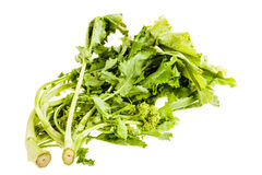 Italian Turnip greens over white Stock Photo
