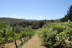 Italian tuscany vineyard Royalty Free Stock Photos